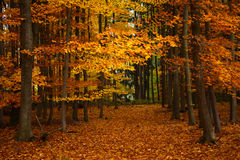 Autumn trees in park Stock Image