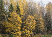 Autumn landscape in the park. Late fall Stock Photo