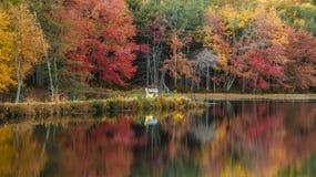 Autumn Trees in Park met Kleurrijke Bladeren Royalty-vrije Stock Foto