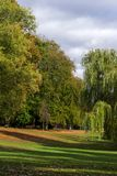 Autumn trees in the park. Natur Hamburg royalty free stock images