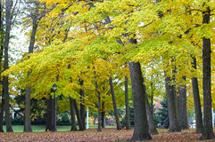 Autumn trees in a park Royalty Free Stock Photos