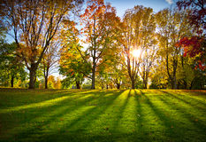 Autumn trees in a park Stock Photos
