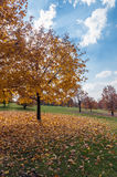 Autumn trees in a park Royalty Free Stock Photography