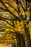 Autumn trees in park Stock Photography