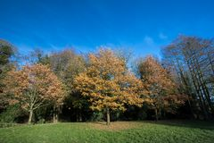 Autumn trees in park. Yellow and gold leaves of fall. Stock Photo