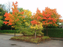 Autumn trees on parking place. A seasonal scenario stock photo