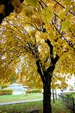 Autumn Trees Royalty Free Stock Photography