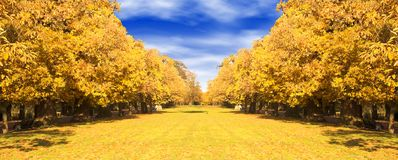 Autumn trees path Stock Images