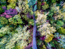Autumn trees with path Stock Images