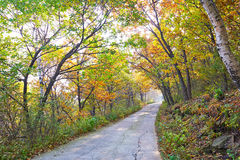 The autumn trees and path autumnal scenery Stock Image