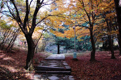 Autumn trees beside path Stock Photography