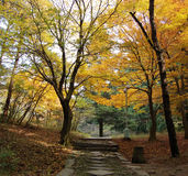 Autumn trees beside path Royalty Free Stock Photography