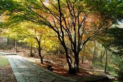 Autumn trees beside path Stock Image