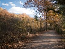 Autumn trees path walkway through country forest no people Stock Photography