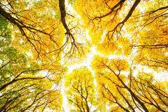 Autumn trees pattern royalty free stock photography