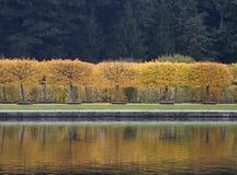 Autumn trees in Peterhof, St Petersburg, Russia Royalty Free Stock Image