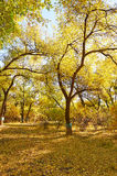 The autumn trees Royalty Free Stock Photography
