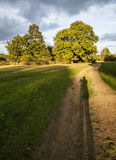 Autumn trees. This picture shows a view of a park in the afternoon, yellowish autumn light. There's a big shadow visible in the bottom of the picture - it's royalty free stock images