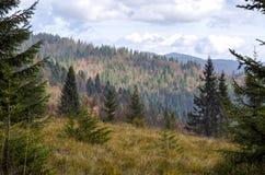 Autumn trees. In polish mountains stock photo