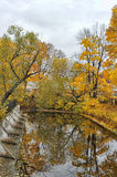 Autumn trees and the pond Royalty Free Stock Images