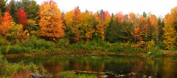 Autumn trees by the pond stock photo