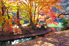 The autumn trees and pond royalty free stock photos
