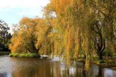 Autumn trees at the pond Stock Photo