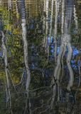 Autumn Trees que refleja en un río - Ontario, Canadá Imagen de archivo libre de regalías