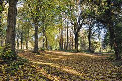 Autumn Trees in Queenswood, Herefordshire Stock Afbeelding