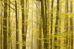 Autumn trees quickly disappearing. Detail of a forest in autumn. Trees is quickly disappearing in the fog stock image