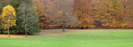Autumn trees with red and yellow leaves royalty free stock photos