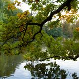 Trees reflected in a calm lake water. Autumn trees reflected in a calm lake water Stock Image