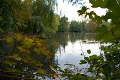 Trees reflected in a calm lake water. Autumn trees reflected in a calm lake water Royalty Free Stock Images