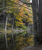Autumn Trees Reflected in een Catskill-Bergmeer royalty-vrije stock foto