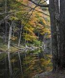 Autumn Trees Reflected i Catskill berg en sjö royaltyfri foto
