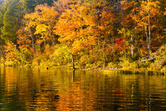 Autumn trees reflected in lake stock images