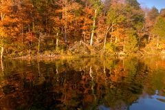 Autumn trees reflected in lake Royalty Free Stock Image