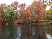 Autumn trees reflected in lake in Fall. Beautiful forest reflecting on calm pond water stock photo