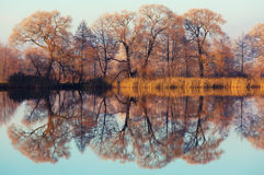Autumn trees reflected in the mirrored water Stock Photos