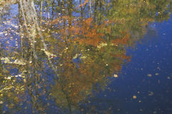 Autumn Trees Reflected in Water Stock Photos