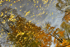 Autumn trees reflected Stock Photo