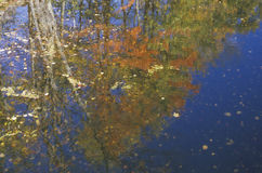 Autumn Trees Reflected in Water, New England Stock Images