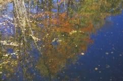 Autumn Trees Reflected in Water, New England Stock Afbeeldingen