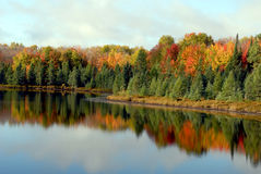 Autumn trees reflecting. Beautiful autumn trees reflecting on a lake stock photography