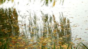 Autumn trees leaves lake. Autumn trees reflecting in the forest lake stock footage