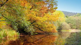 Autumn trees reflecting in the forest lake. Lake in colorful autumn forest. Autumn trees reflecting in the forest lake stock footage
