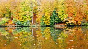 Autumn trees reflecting in the forest lake. Lake in colorful autumn forest. Autumn trees reflecting in the forest lake stock video
