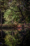 Autumn trees reflecting in lake. Colorful autumn trees reflecting in a lake in Wisconsin Stock Images