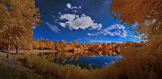 Autumn trees reflecting in pond Stock Photography