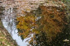 Autumn trees reflecting in pond. Tranquil scene of autumn trees reflecting in pond Stock Photography